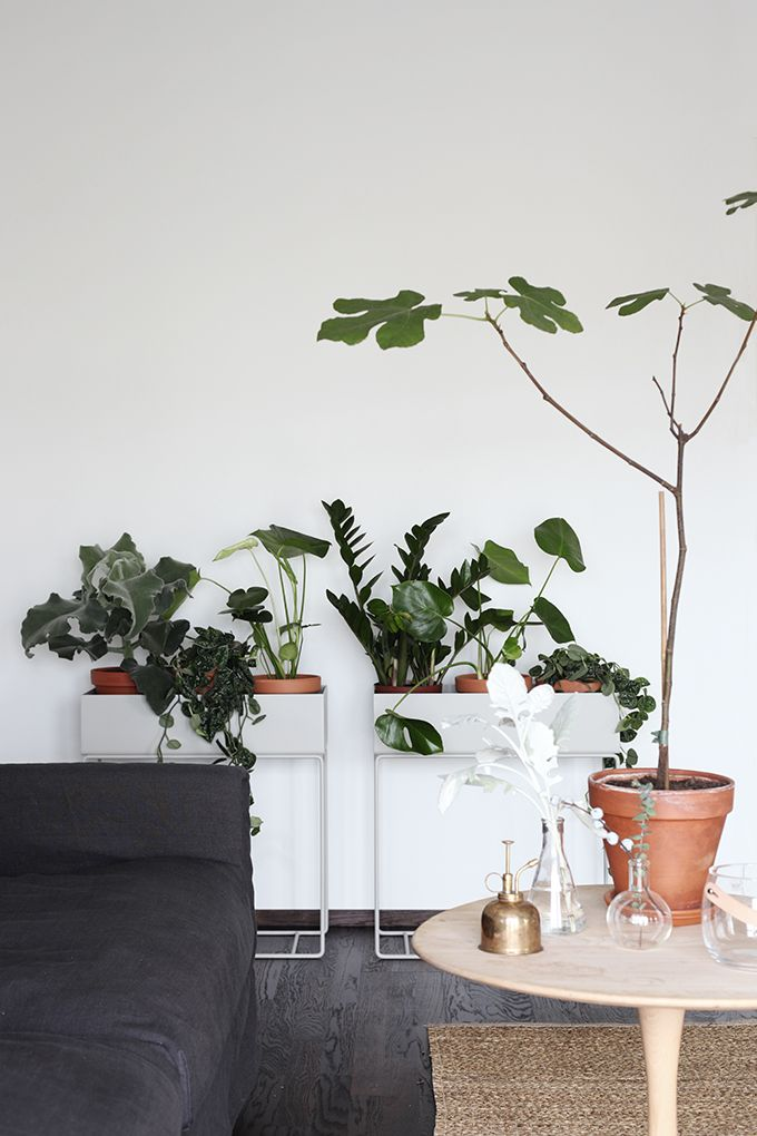Pinterest Pinner Interview: Urban Jungle Bloggers grünes Zuhause