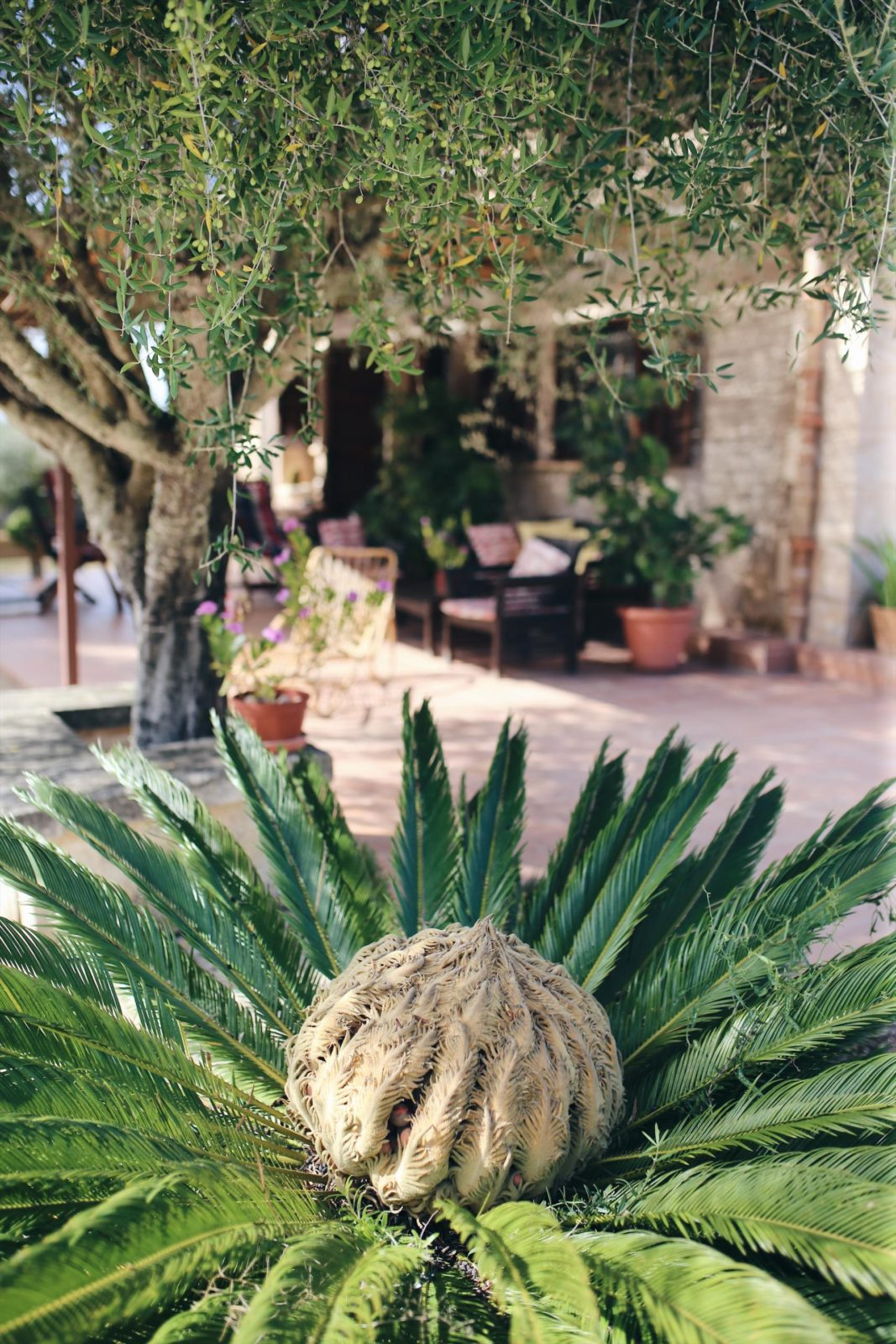 Mallorca, Du hast neue Fans! Finca Leben und Inseltips Teil 1 #Mallorca #Fincallorca #Reisenmitkindern #Malle #Mallorcatips | Pinspiration.de