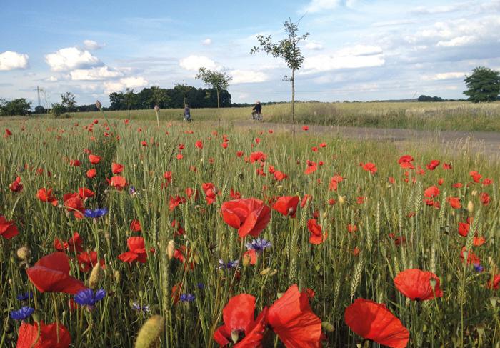 Tipps für (Familien) Urlaube in Brandenburg von Liebling Brandenburg | Pinspiration