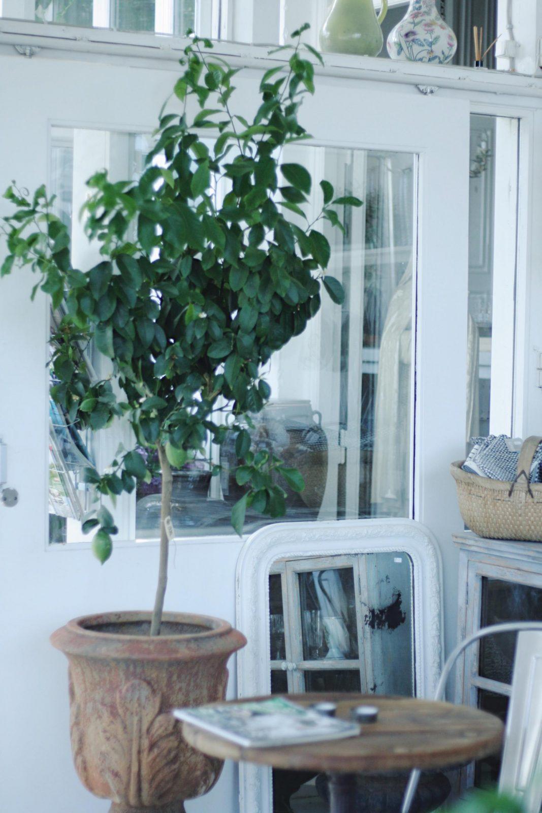 Interior-Idylle in Hornbæk: Bord & Bænk & jede Menge Tipps für Dänemark mit Kindern | Pinspiration