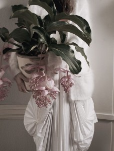 Pantone Color Of The Year 2016: Medinilla magnifica Pflanze