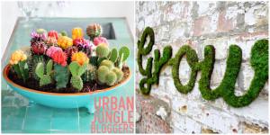 Urban Jungle Bloggers Mini Garten