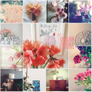Urban Jungle Bloggers herzundblut instagram