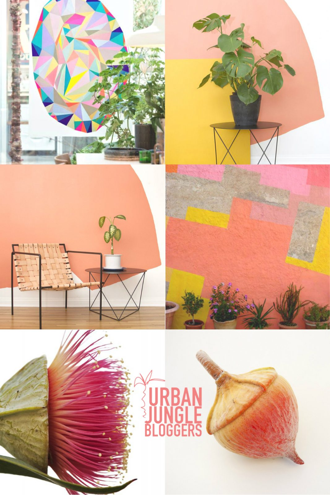 Urban Jungle Bloggers plant color pop