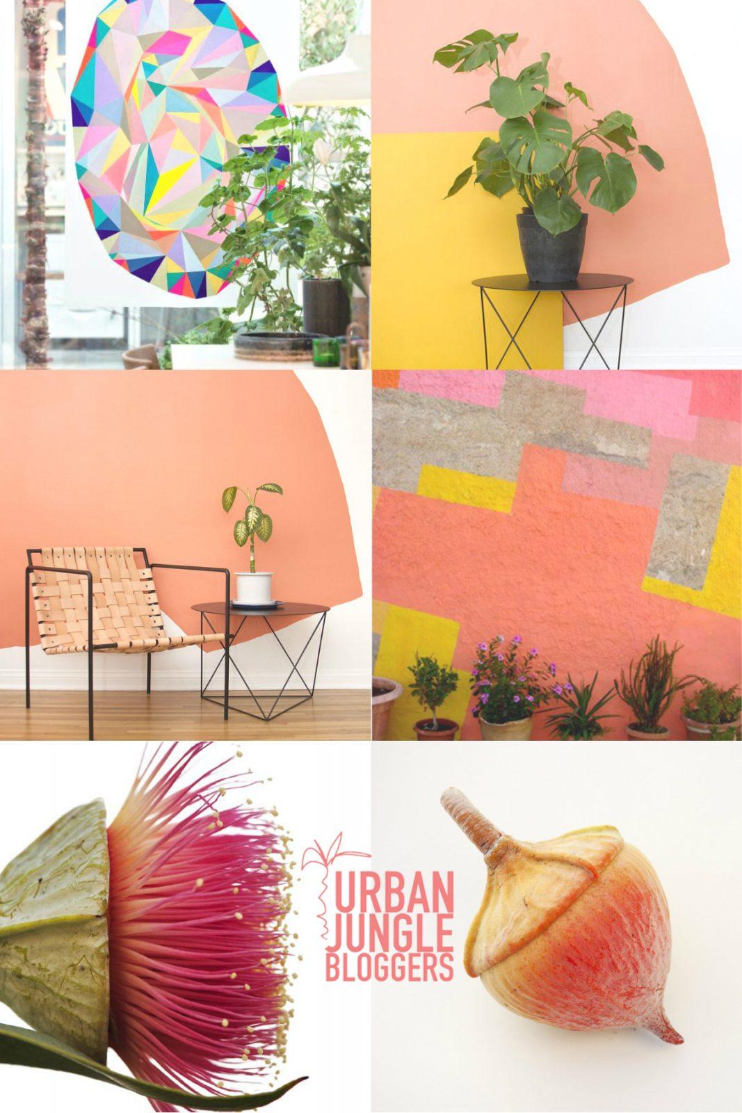 Urban Jungle Bloggers plant color pop