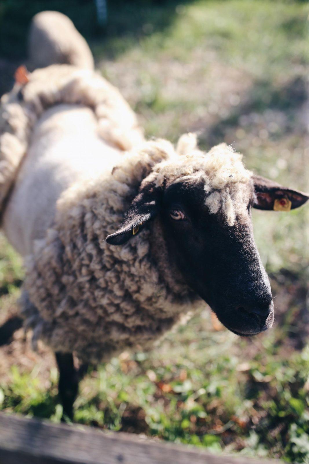 Insel Usedom mal anders: Familienurlaub am Peenestrom im Hinterland | #Usedom #Ottoliving #Achterwasser #Peenestrom #Urlaubmitkindern #UrlaubinDeutschland | Pinspiration.de